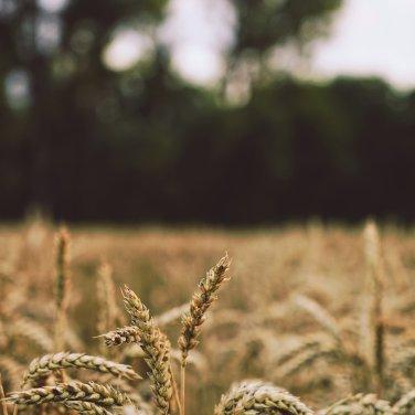 Regjeringen svekker landbruket